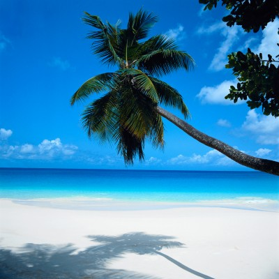 Palm Tree Leaning over Beach Seychelles