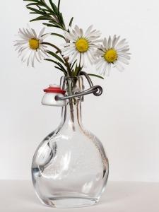 rosemary, daisy, aromatherapy
