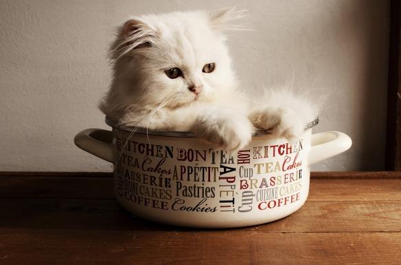 cute kitten in a pot