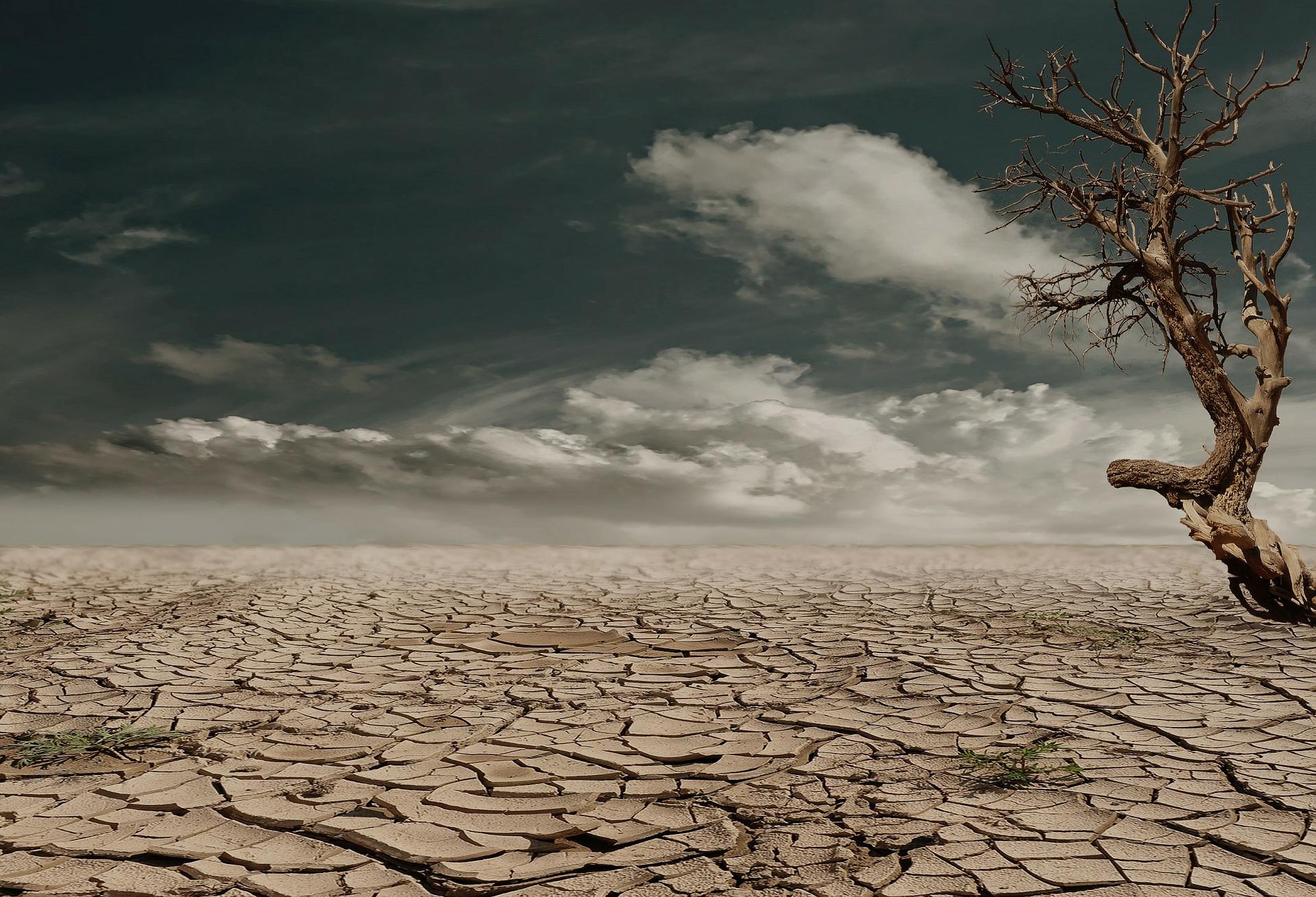 drought, desert, lack of work