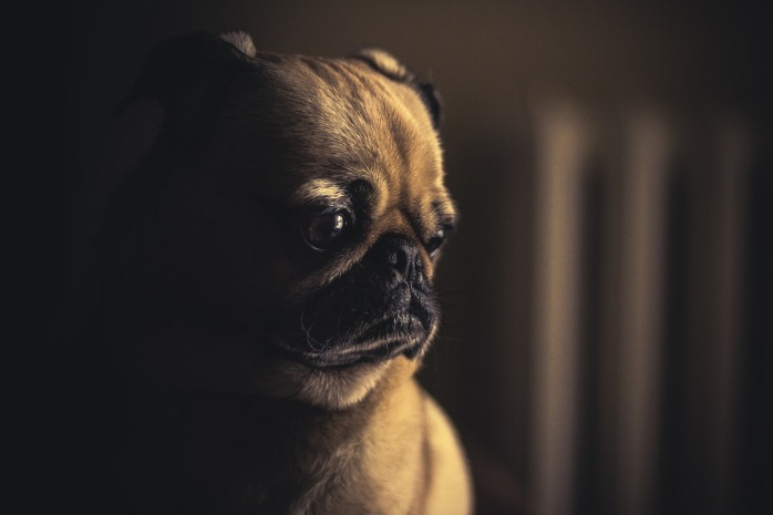 sad dog Image by Free-Photos from Pixabay